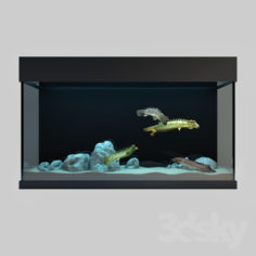 Predatory Fish And Aquarium                                      Free 3D Model