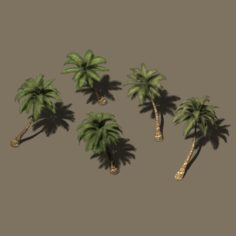Plant – Coconut Tree 271 3D Model