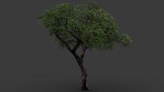 Realistic Tree 2 3D Model