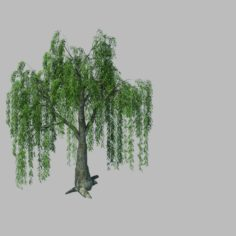 Plant – willow 1-1 3D Model