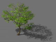New Village – Landscape Tree 01 3D Model