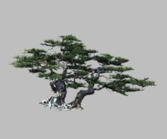 Journey to the West – Putuo Mountain – Pine 01 3D Model