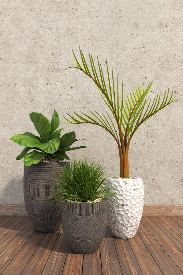 Plants Decor 3 3D Model