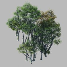 Plant Forest – Birch Grove 02 3D Model