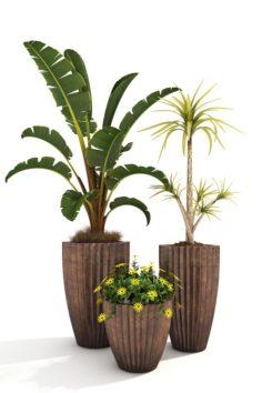 Plants Decor 2 3D Model