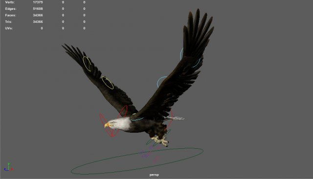Flying animated rigged of an eagle 3D Model - 3DHunt co