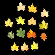 Leaves 01 3D Model