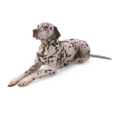 Dalmatian Lying Dog 3D Model
