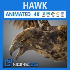 Animated Hawk 3D Model