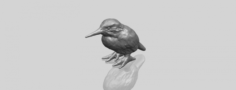 Kingfisher 3D Model