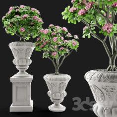 Adenium Desert rose in classic vase.                                      3D Model