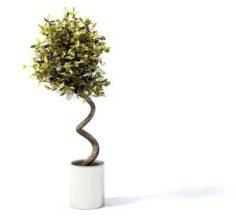 Flower pot 7 3D Model