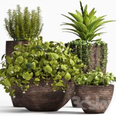 PLANT SET -100                                      3D Model