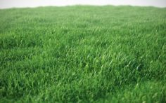 3D scene with green grass