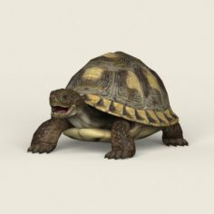 Game Ready Tortoise 3D Model