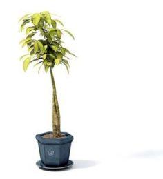Flower pot 11 3D Model