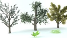 A set of vegetation 3D Model