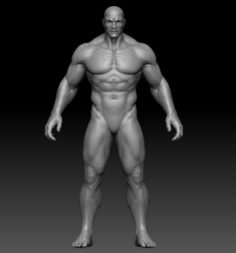 Male anatomy zbrush 3D Model