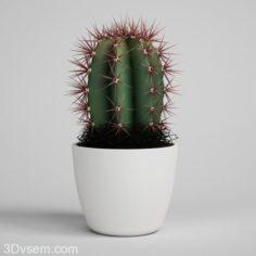 Cactus with flower pot 3D Model