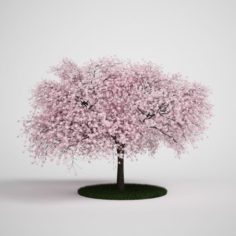 Tree With Pink Flower 3D Model