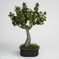 Tree with Flower Pot 3D