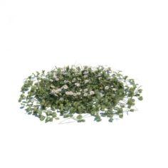 3D Model Grass Garden Plant