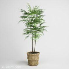 Fern Tree With Rattan Pot 3D Model