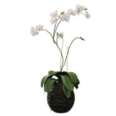 Orchid in a glass flowerpot 3D Model