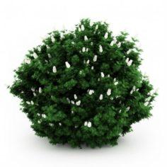 Bush with white flower 3d model
