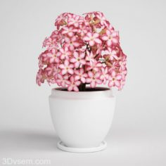 Pink flower with white flower pot