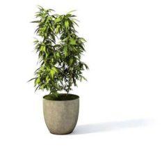 Flower pot 2 3D Model