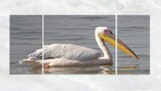Triptych Wall Art Pelicans 3D Model