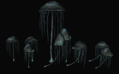 Black reach epic mushroom 01 3D Model