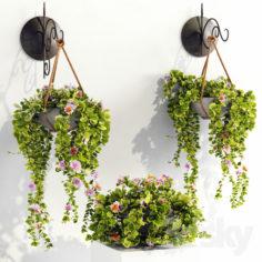 Plant pots                                      3D Model