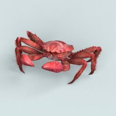 Christmas Island Red Crab 3D Model