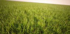 Grass pack 1 – 28 model 3D Model