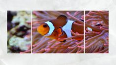 Triptych Wall Art Clownfish and Sea Anemone 1 3D Model