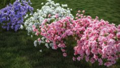 REAL 10 BEAUTYFUL COLORED SHRUB MODELS – Azalea Japonica 10 model with several advanced render 3D Model