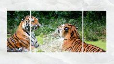 Triptych Wall Art Playful Tigers 3D Model