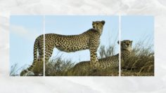 Triptych Wall Art Cheetahs 1 3D Model