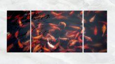 Triptych Wall Art Goldfish Pond 3D Model
