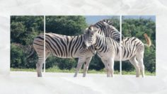 Triptych Wall Art Zebras 3D Model