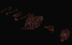 Bones bloody 3D Model