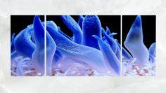 Triptych Wall Art Blue Sea Anemone 3D Model