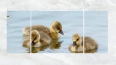 Triptych Wall Art Duck Chicks 3D Model
