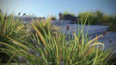JAPANESE SEDGE GRASS 11 GRASS SHRUBS 3D Model