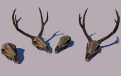 Deer skulls 3D Model