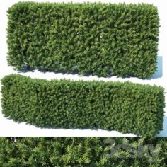 Taxus Baccata # 2 modular hedge 80cm                                      3D Model