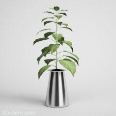 Houseplant Flower 3D Model