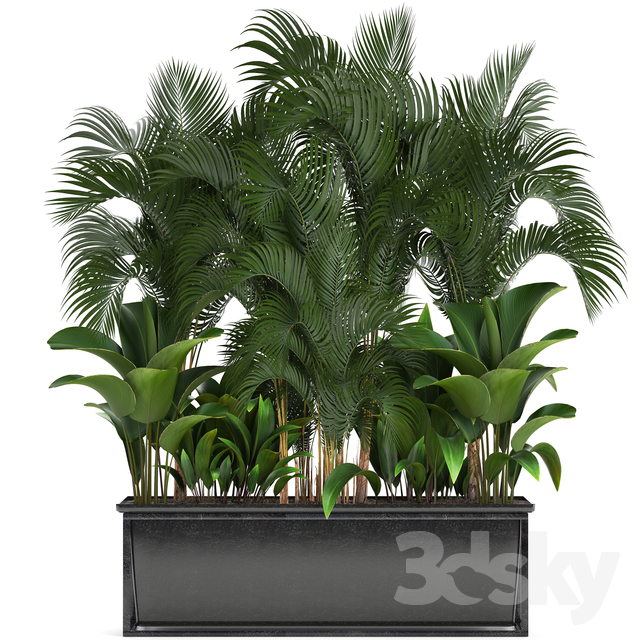 Plant collection 246.                                      3D Model